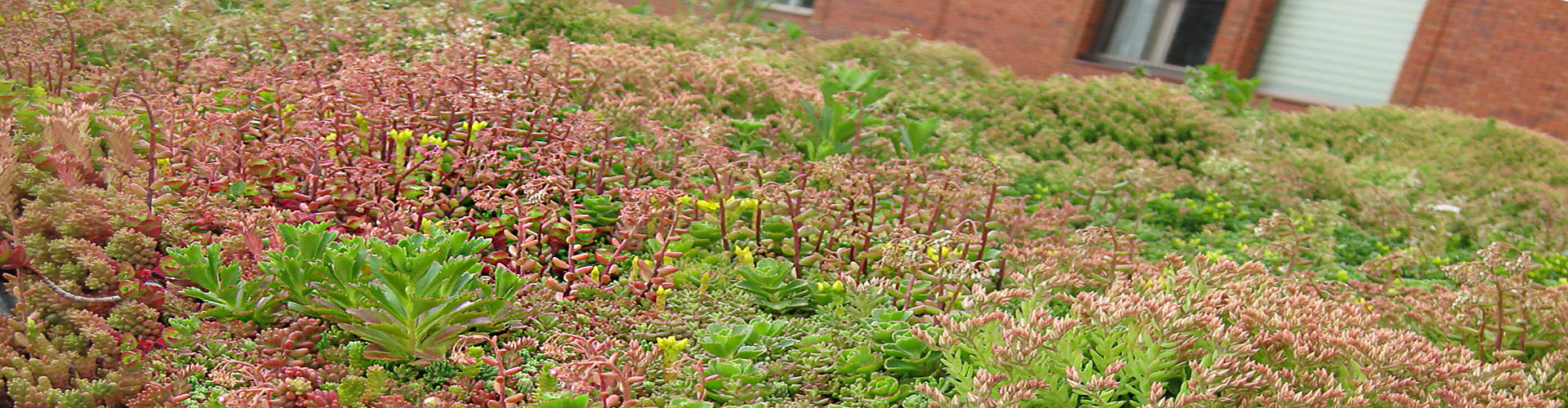 0b Subsub Type Sedum Mix 1929x500 d